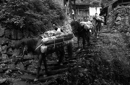 《我们的黑茶》摄影艺术展作品之茶马古道篇(一)